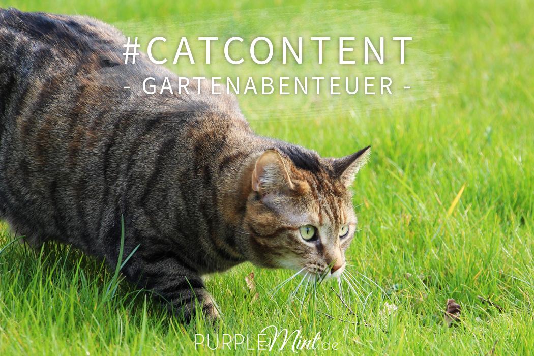 #catcontent - Gartenabenteuer