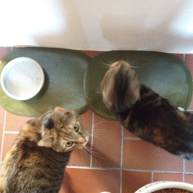 pmdd18 - Katzen füttern