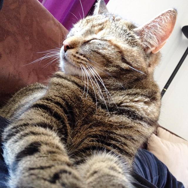 pmdd18 - Sofa mit Katze